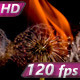 Dandelions in the Fire - VideoHive Item for Sale