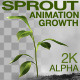 Sprout Animation Growth - VideoHive Item for Sale
