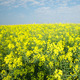 Fields Of Gold Pack Two - VideoHive Item for Sale