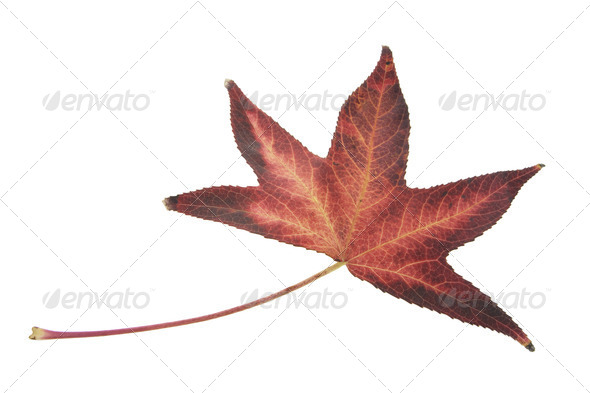 Red Leaf - Stock Photo - Images