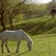 Horses In a Field, Landscape - VideoHive Item for Sale