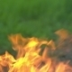 Forest Fires - VideoHive Item for Sale