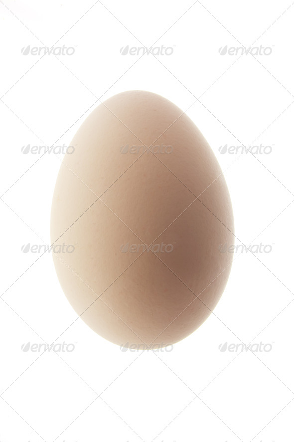 White Egg - Stock Photo - Images