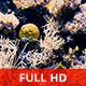 Underwater Scene - VideoHive Item for Sale