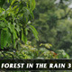 Forest in Rain No.3 - VideoHive Item for Sale