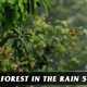 Forest in Rain No.5 - VideoHive Item for Sale
