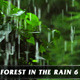 Forest in Rain No.6 - VideoHive Item for Sale