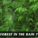 Forest in Rain No.7 - VideoHive Item for Sale