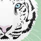 White Tiger Illustration - GraphicRiver Item for Sale