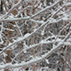 Winter Tree Branch And Snow - VideoHive Item for Sale