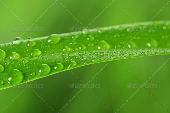 green grass - Stock Photo - Images