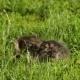 Little Tabby Kittens  On Green Grass - VideoHive Item for Sale