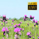 Wild Flowers On The Field - VideoHive Item for Sale