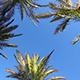Blue Sky And Palm Leaves - VideoHive Item for Sale