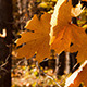 Beautiful Autumn Yellow Leaves - VideoHive Item for Sale