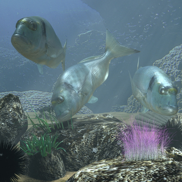 Sea Bream Fish Rigged with Underwater Scene - 3DOcean Item for Sale