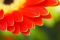 flower petals - PhotoDune Item for Sale
