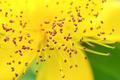 pollen - PhotoDune Item for Sale