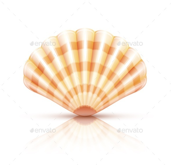 Shellfish Seashell Isolated - Organic Objects Objects