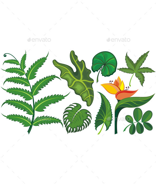 Set of Tropical Leaves and Flowers - Flowers & Plants Nature