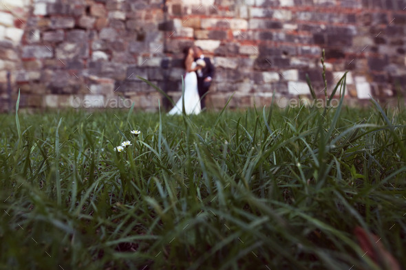 Chamomile flowers with bride and groom as silhouettes in the background - Stock Photo - Images