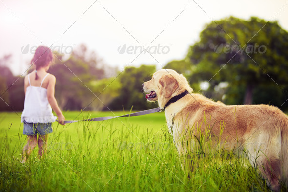 Young girl with golden retriever walking away - Stock Photo - Images