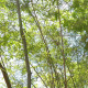 Bamboo Forest - VideoHive Item for Sale