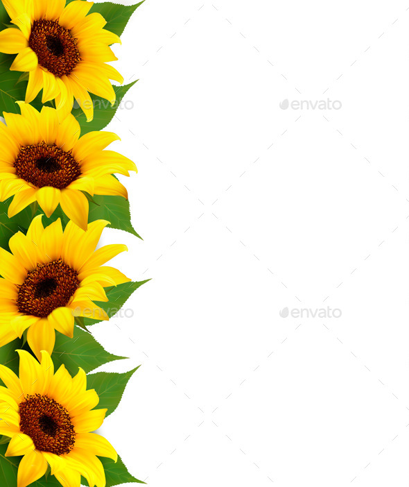 Sunflowers Background With Sunflower And Leaves - Flowers & Plants Nature