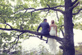 Bride and groom sitting in a tree near lake - PhotoDune Item for Sale