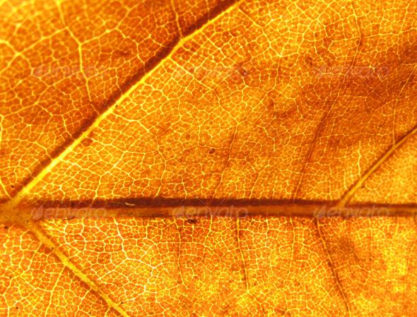 Dead leaf background - Nature Textures