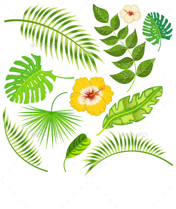 Tropical Leaves and Flowers Vector - Flowers & Plants Nature