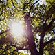 Sun Between Trees - VideoHive Item for Sale
