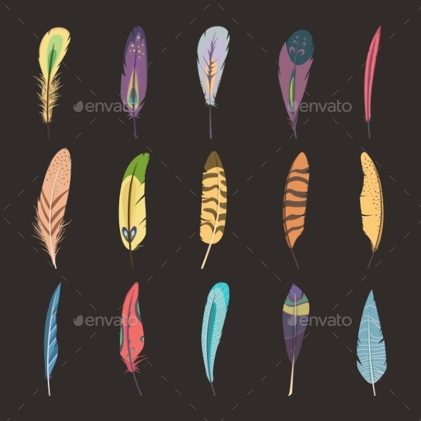 Set Of Feathers - Decorative Symbols Decorative