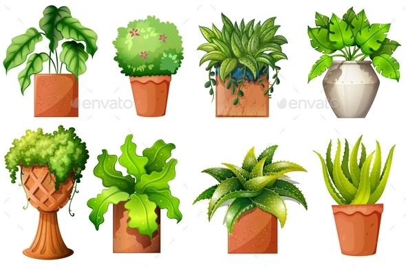 A Collection of the Different Pot Plants - Flowers & Plants Nature