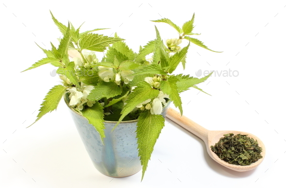 Fresh nettles with white flowers in cup and dried plant - Stock Photo - Images