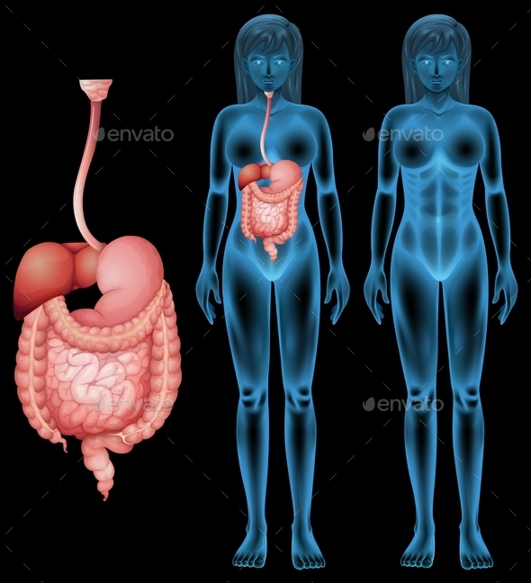 Human Digestive System - People Characters