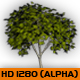 Forest 3d layers PACK - VideoHive Item for Sale
