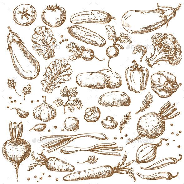 Vegetables Set - Food Objects