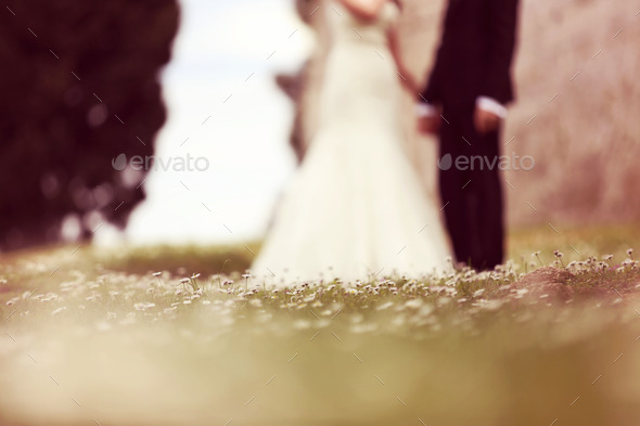 Chamomile field with bride and groom as silhouettes - Stock Photo - Images