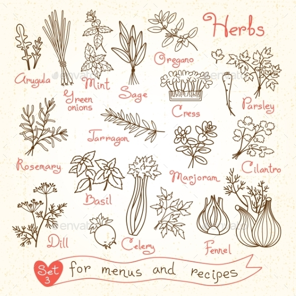 Set Drawings Of Herbs For Design Menus, Recipes - Food Objects