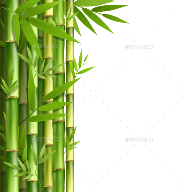 Green Bamboo Grove Isolated on White Background - Flowers & Plants Nature