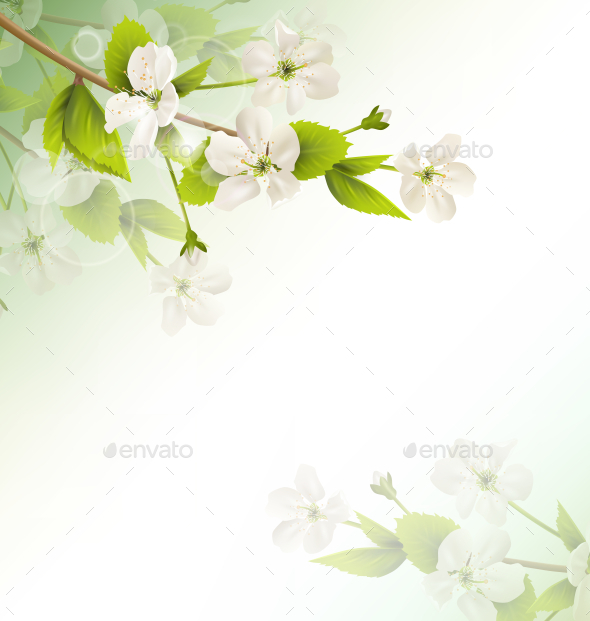 Cherry Branch with White Flower on Green Background - Flowers & Plants Nature