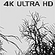Dead Forest - Black and White - VideoHive Item for Sale