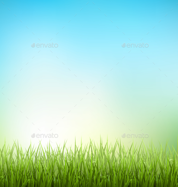 Grass Lawn with Sunrise on Blue Sky - Flowers & Plants Nature