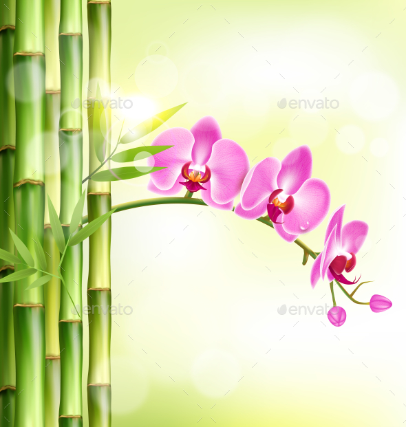 Pink Orchid with Bamboo and Sunlight on Green - Flowers & Plants Nature