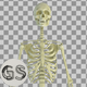 Skeleton - VideoHive Item for Sale