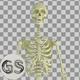 Skeleton - VideoHive Item for Sale