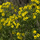 Yellow Wildflowers in Spring Time - VideoHive Item for Sale