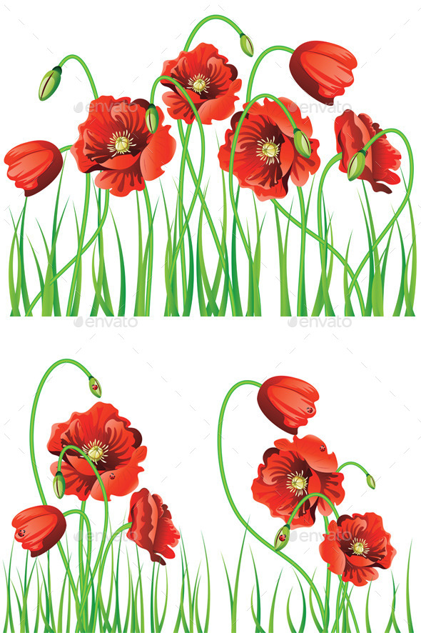 Poppy Flowers with Grass - Flowers & Plants Nature