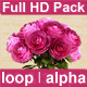 Pink Roses - VideoHive Item for Sale